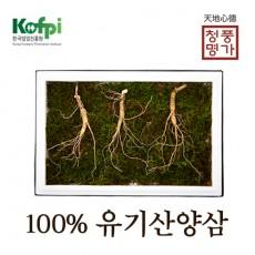 산양산삼 10년근 3뿌리