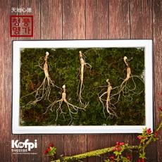 유기농 산양산삼 10년근 5뿌리